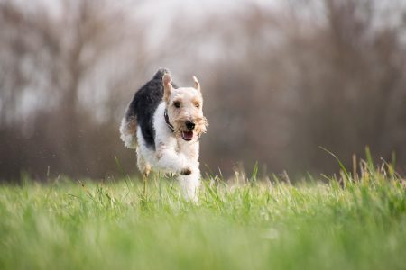 6 greșeli în hrănirea câinilor